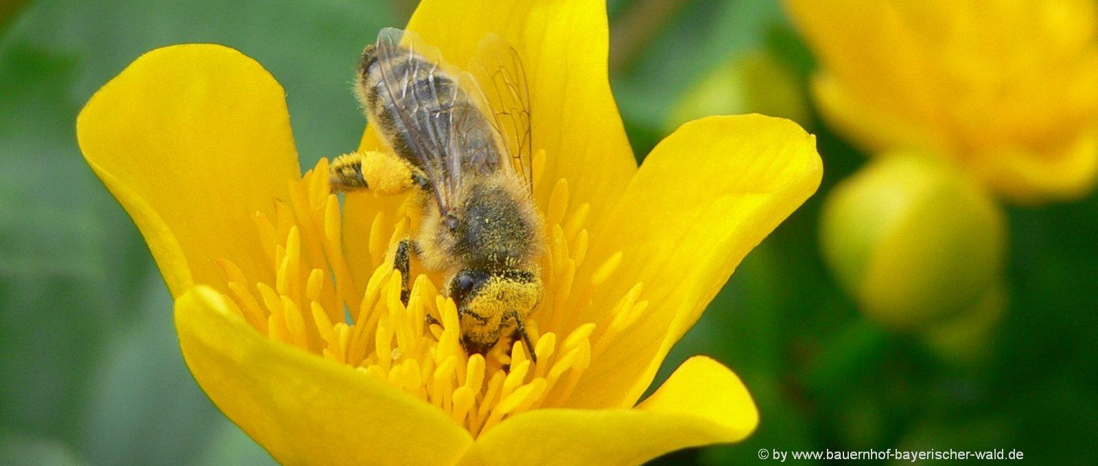 schöne Naturfotos kostenlose Blumenbilder Pflanzen Fotos