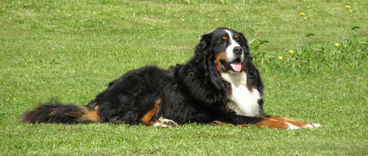 Bauernhof Urlaub mit Hund und Kinder Bayerischer Wald