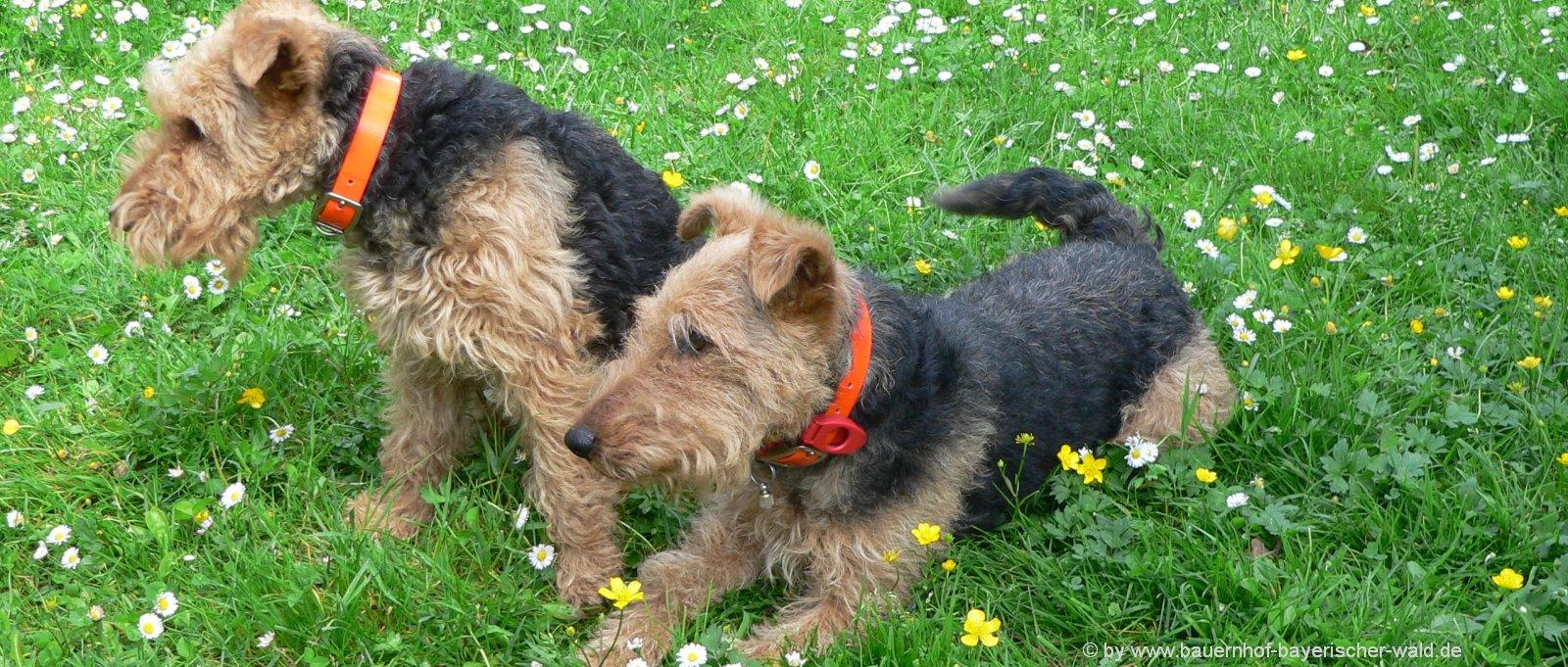 Bayerischer wald Urlaub mit Hund am Bauernhof