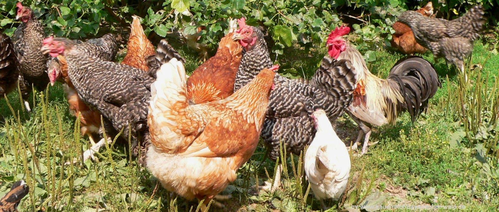 Bauernhoftiere Süße Tierfotos schöne Tierbilder