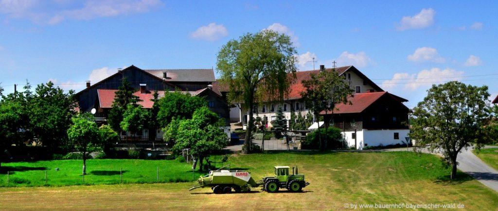 Ferienhaus im Bayerischen Wald am Bauernhof Paulus