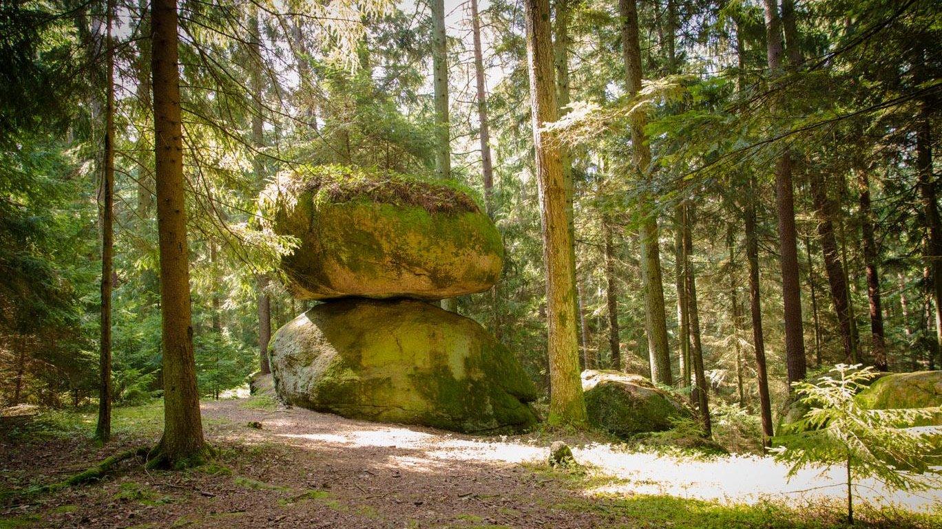 piendl-guthof-bauernhof-wanderurlaub-bayerischer-wald-schwammerlstein-1400