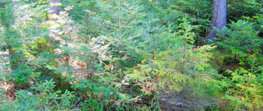 Jungholz Waldschonung kleine Bäume